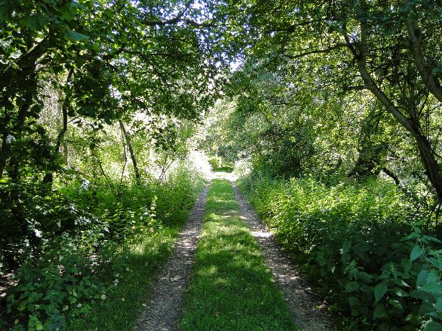 Trackway leading to Stanley Carrs