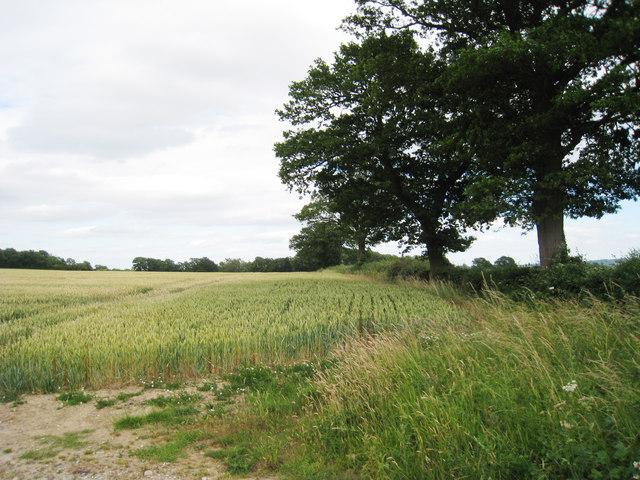 Wheatfield off Dwelly Lane
