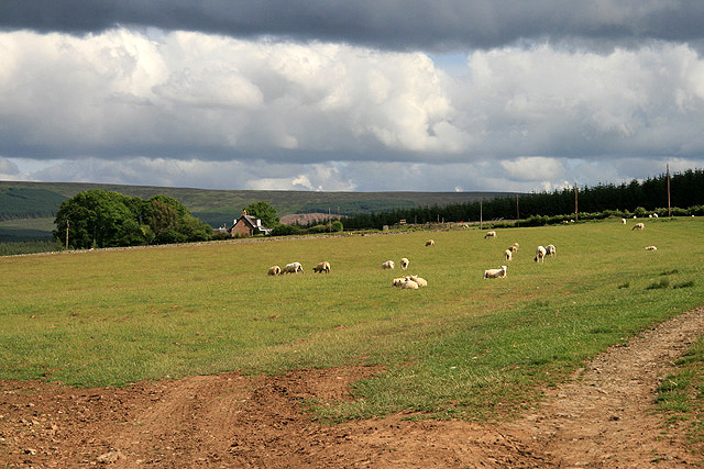 A livestock field at Dykeraw