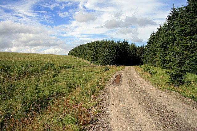 A forestry road in Dykeraw Plantation