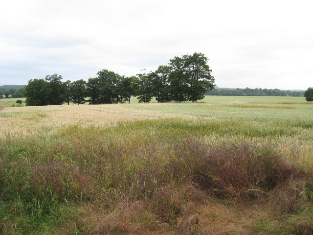 Crop Field off Hever Road