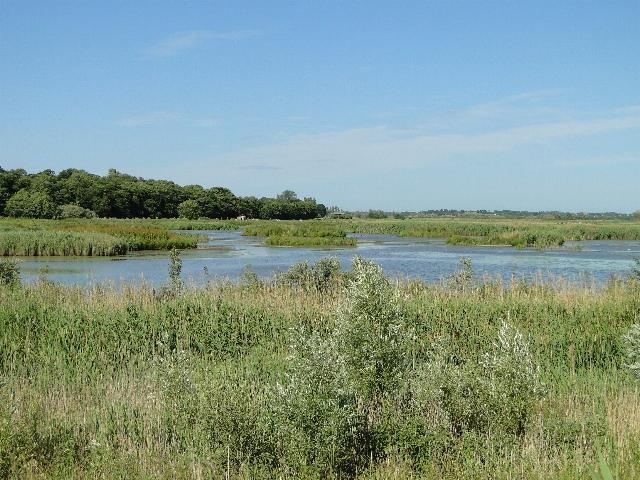 Marshland and Wildlife Habitat