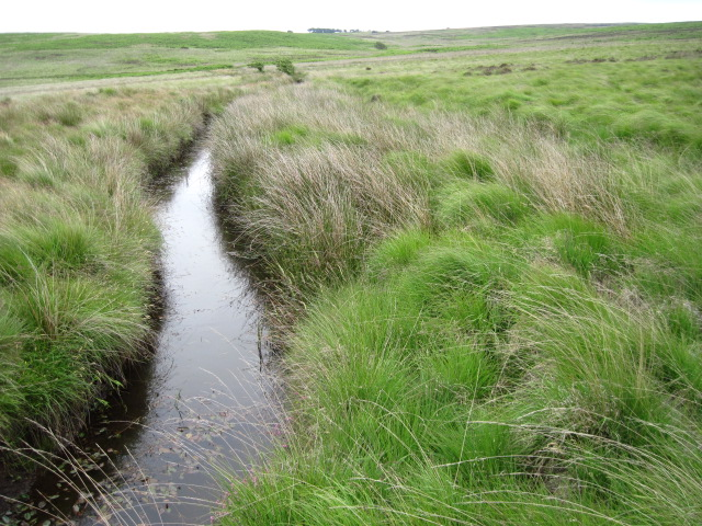 Emperor Stream on Gibbet Moor