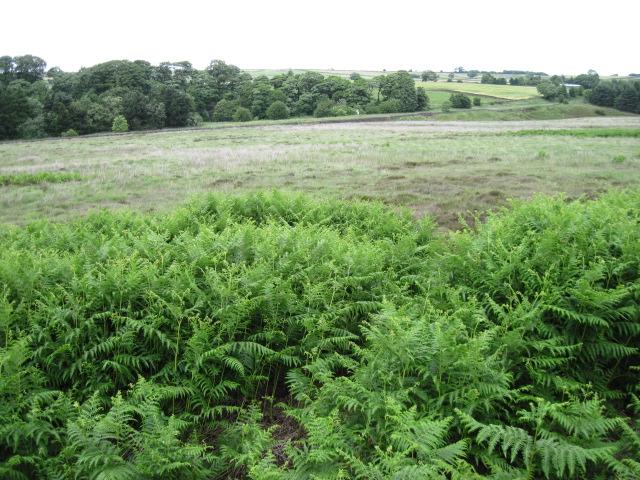 Brampton East Moor towards A619
