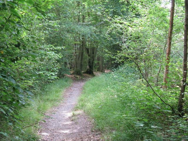 Bridleway through Sinnock's Rough
