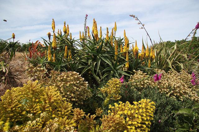 Quayside flowers