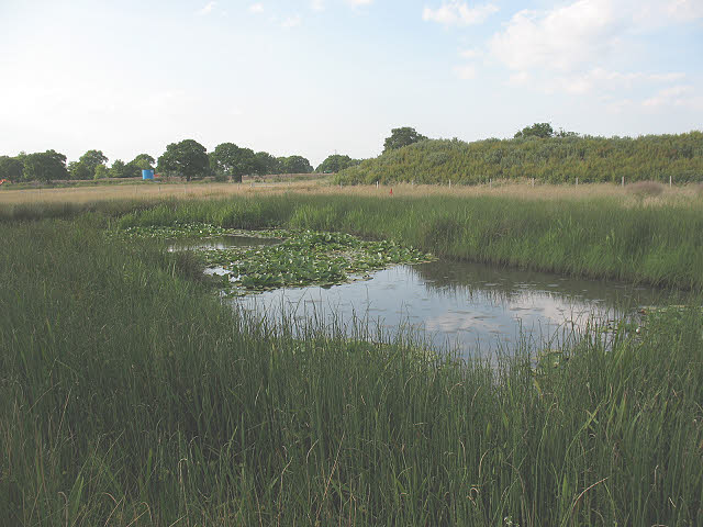 Marshy pond near Byley