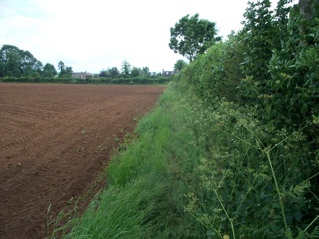 Field edge footpath