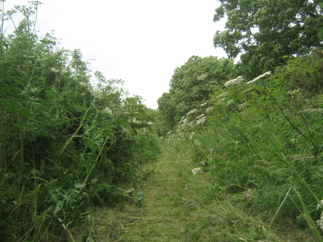 Footpath from Dalton Piercy to Elwick