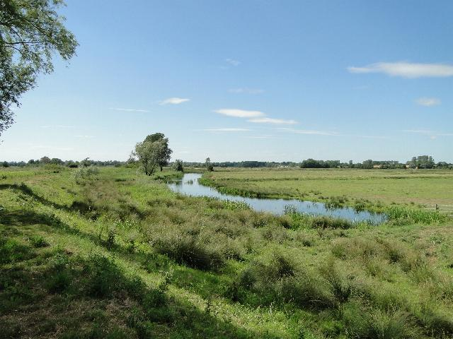 Drainage Channel and Marshes