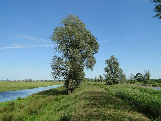 Willow Tree on the River Bank