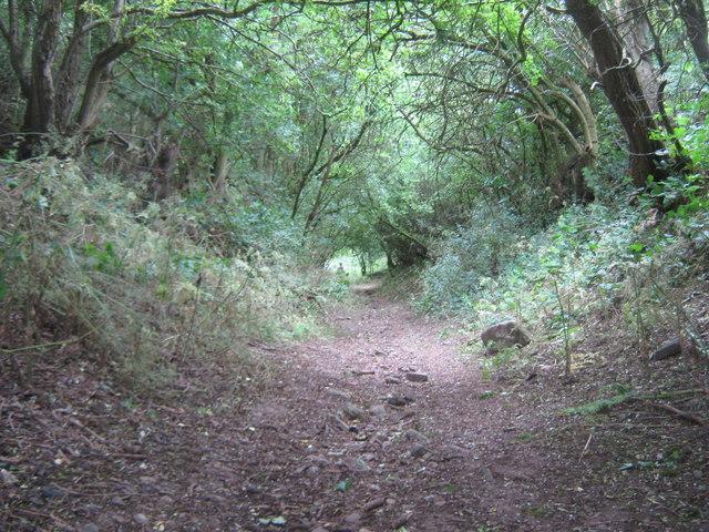 Footpath from Elwick to Dalton Piercy