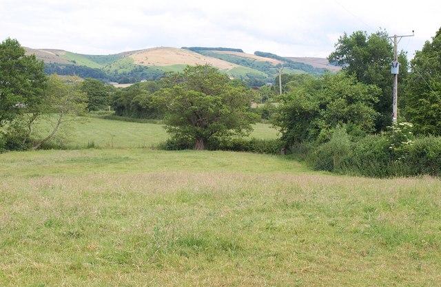 Corner of meadow, Sampford Brett