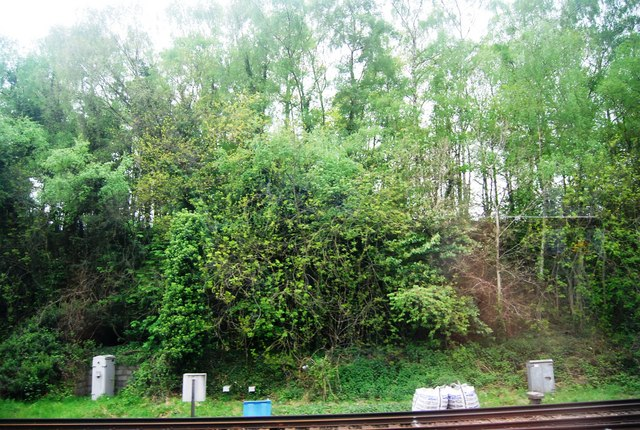 Trees in a railway cutting