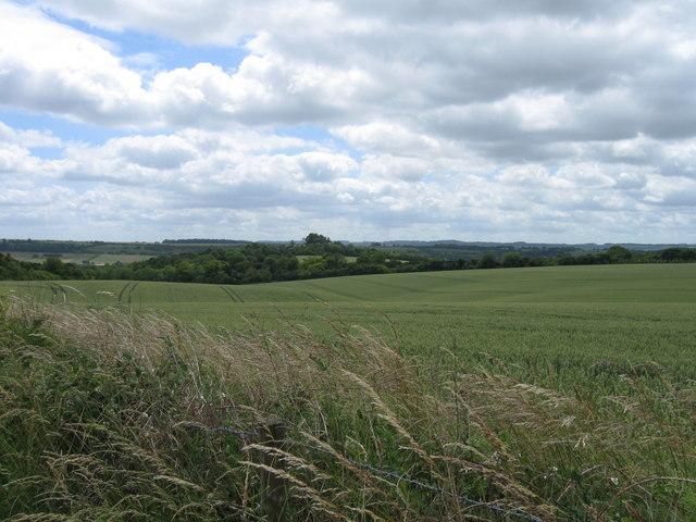 Field near Firsdown