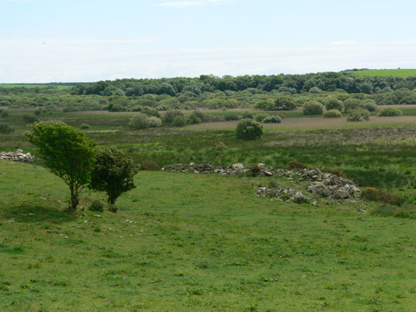 Moorland at Longcastle