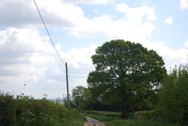 Large Oak tree by Clearwater Lane (Sussex Border Path)