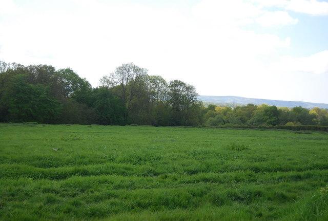 A good crop of grass!
