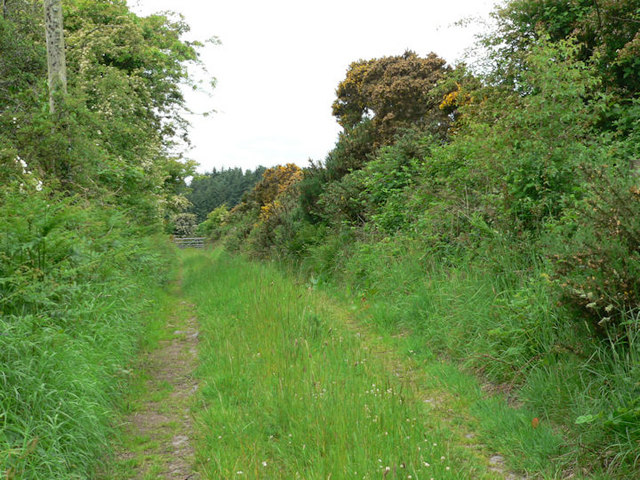 Field access track, Blackmoor