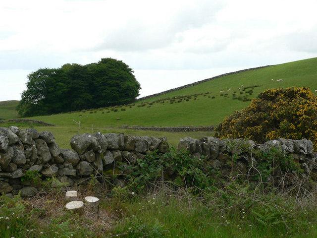 Moorland grazing