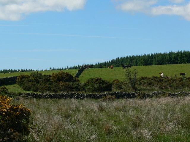 Hill farming at  Barraer