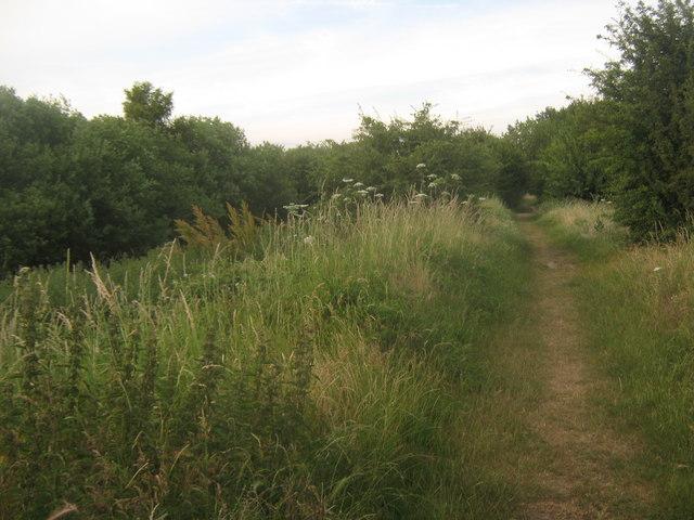 Footpath beside Kemsley Marsh dyke