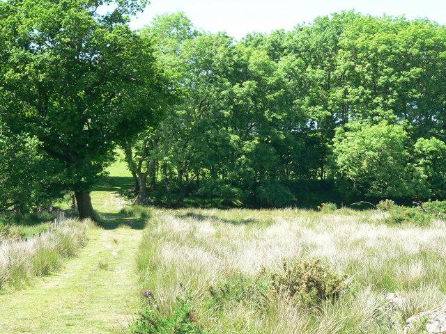 Hillside access near Knockskeog Farm