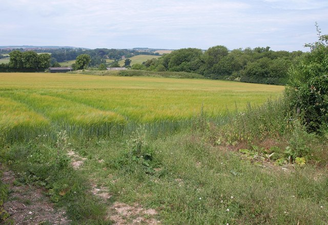 Field of barley, Langton Lodge