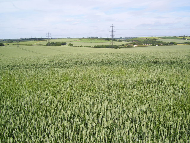 Cropland by Wood Lane