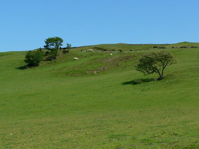 Well grazed hillside