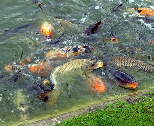 Feeding Fish Frenzy