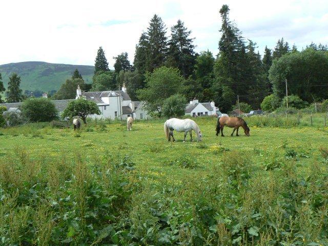 Horses near Old Blair