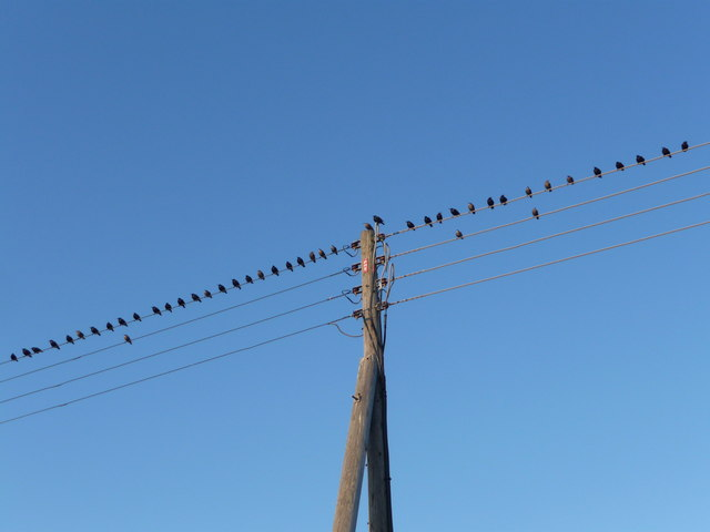Brean : Blackbirds on the Wire