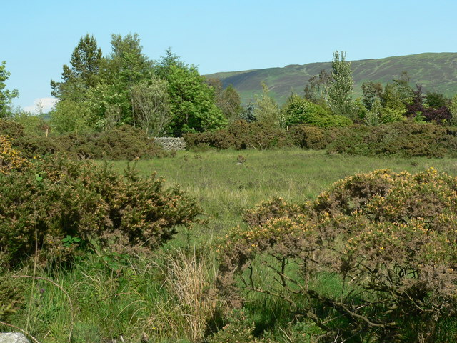 Gorse scrub around buildings area