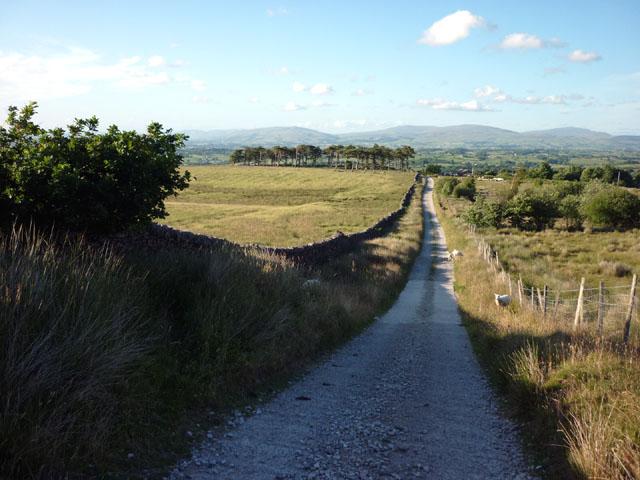 The track to Backsbottom Farm
