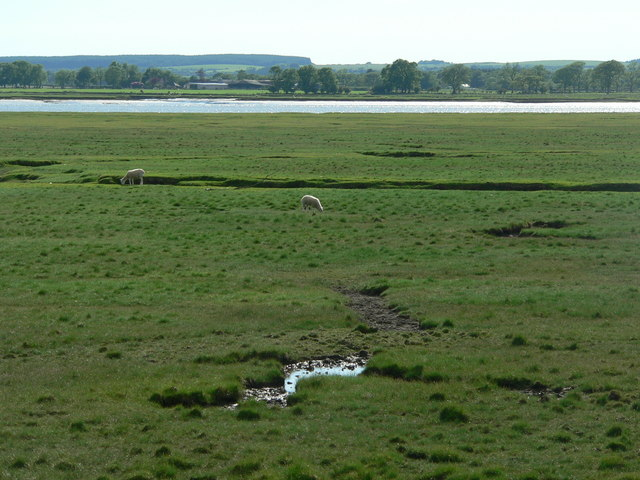 Sheep on mud flats