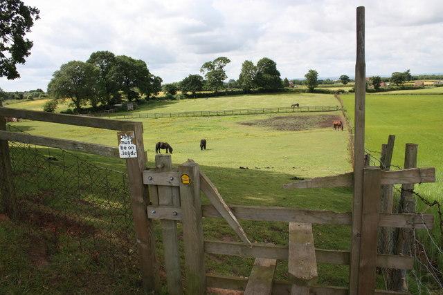 Footpath through horse pasture