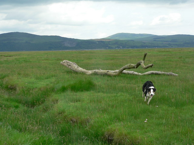 Mud flats at Wigtown, with stranded tree