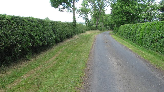 The hedge trimmings are back