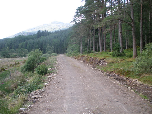 Forestry road in Glen Goil