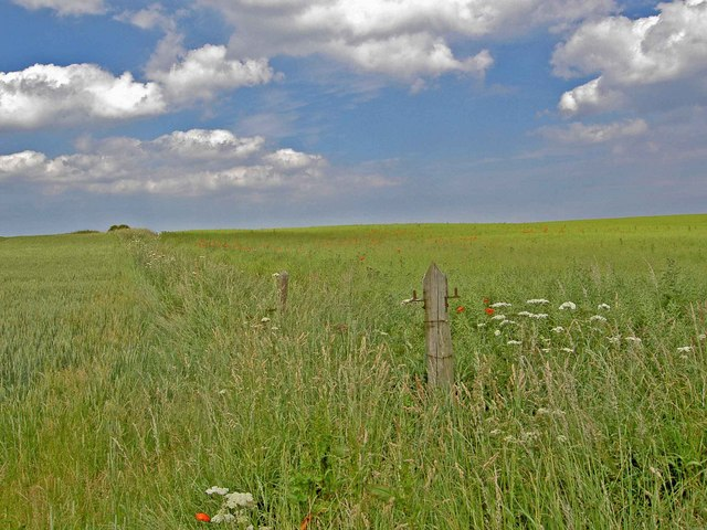 Speeton farmland
