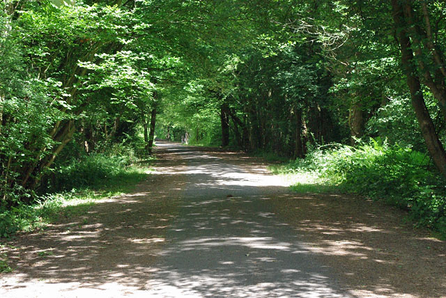 Cuckoo Trail - typical wooded section