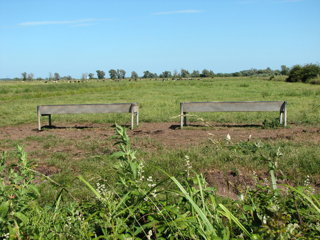 Cattle feed troughs on the edge of a marsh pasture