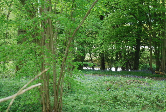 Woodland, bluebells and pond by the Sussex Border Path