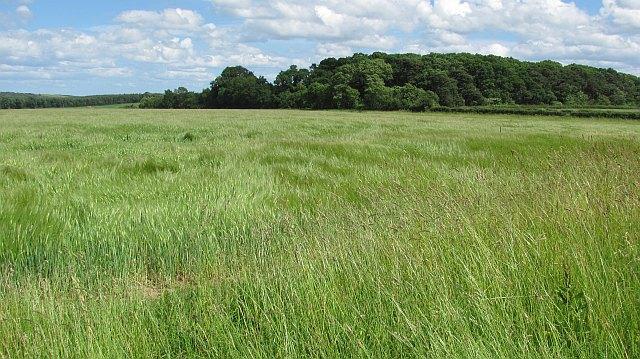 Barley, Fernyrig