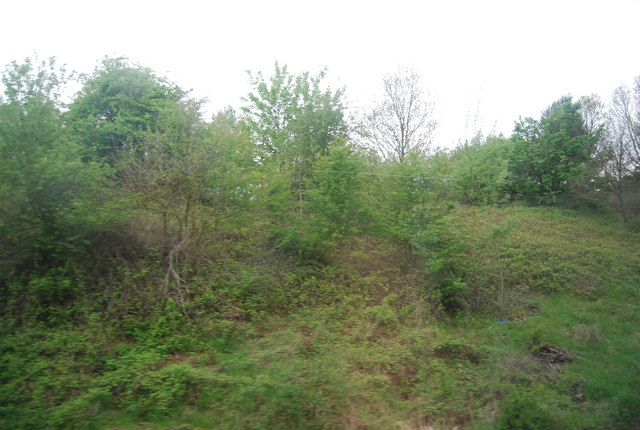 Trees on the railway cutting