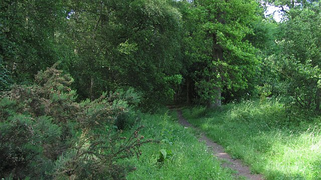 Birgham Wood