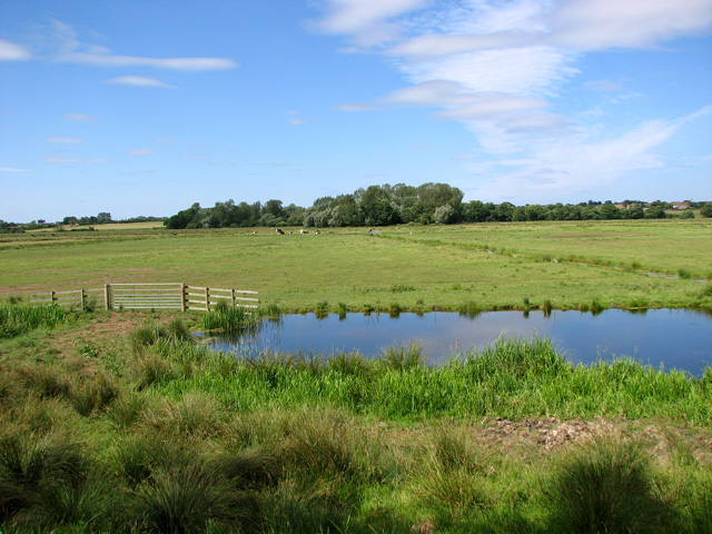 Marsh pastures north of the River Waveney