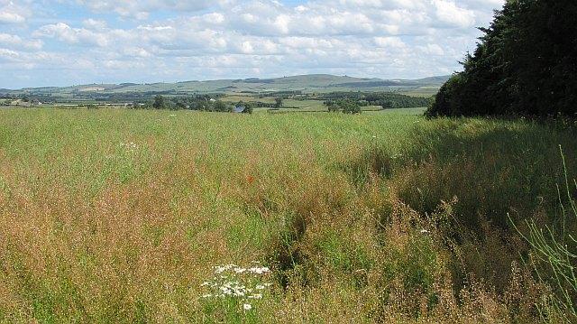 Oilseed rape field, Homebank