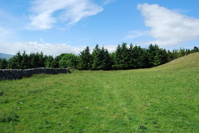 Grazing near High Birkwith